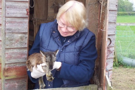 Soay Sheep — International Ambassadors of Good Will