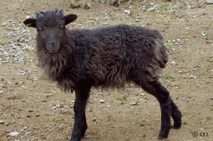 Vieva at age 7 weeks