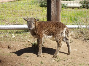Appleby at age 4 weeks basks in the spring sunshine