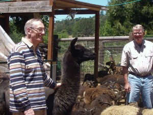 John Hooper and Steve admire Soay ewes