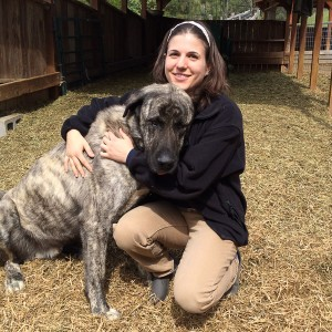Saltmarsh Ranch Livestock Guardian Dog