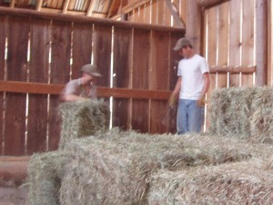 George shows Shawn how to stack the 100+pound bales in our old barn