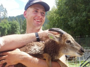 Soay sheep elicit smiles even from a confirmed cattleman