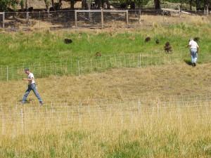 Hustling to set fence in 2008