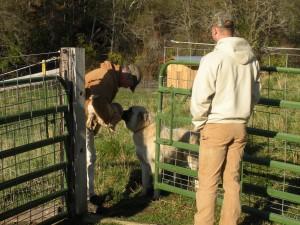"""Big dog Jacob greets """"little"""" puppy Khloe"""