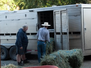 For several years Ron Keener hauled sheep all over the U.S. for us