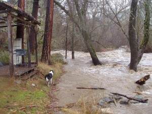 Molly doesn't recognize her river, already far out of its banks